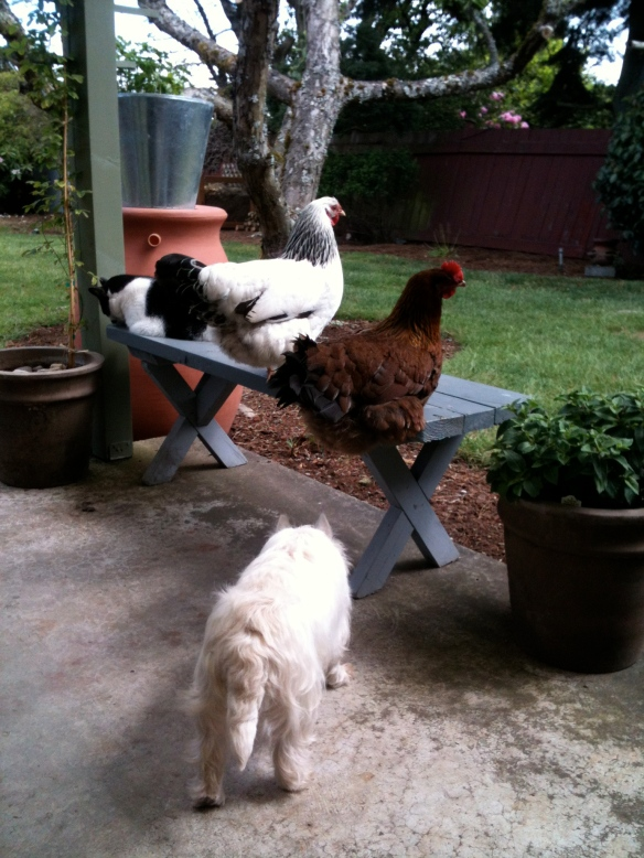 Cat, chickens, dog, enough said.